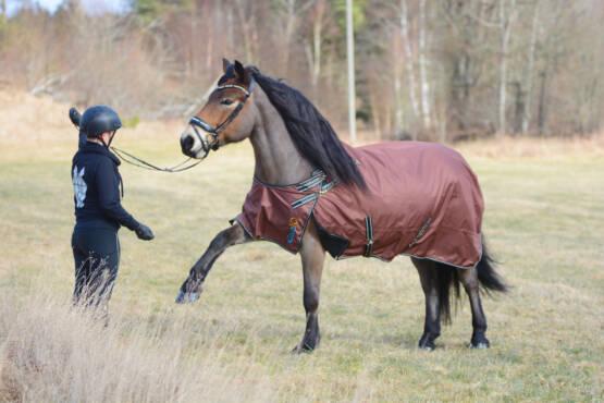 Bogfrihet för hästen